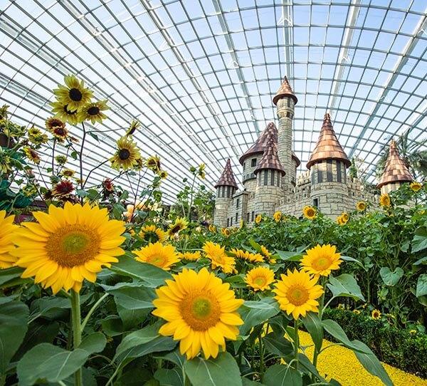 """Sunflower Surprise"" floral display"